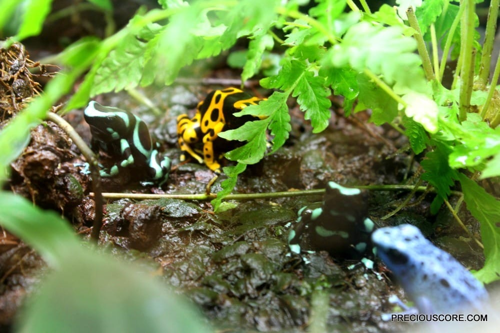 colourful-frogs-at-como-zoo-minnesota