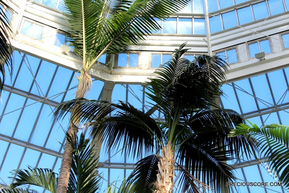 palms-at-como-conservatory