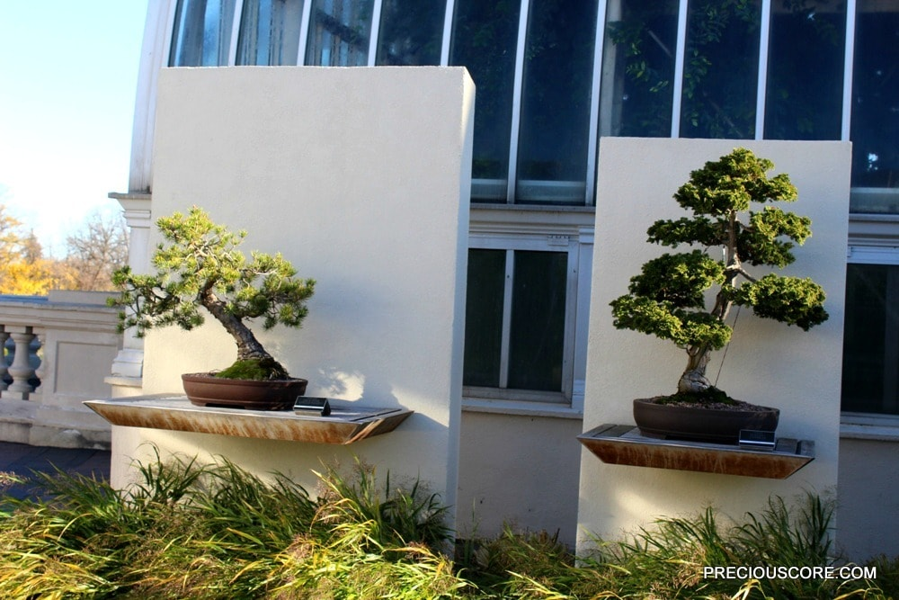 bonsai-plants-at-como-conservatory