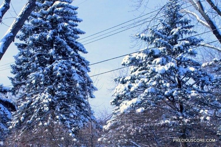 winter-in-minnesota