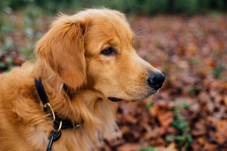 How do I overcome the fear of dogs?
