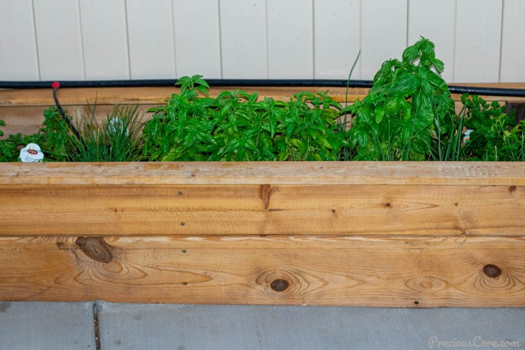 Herbs in a wooden planter